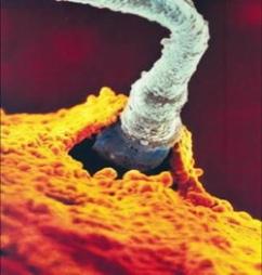 Донер спермы в екатеринбурге